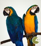chovatelské potřeby pro ptáky