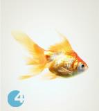 Chovatelské potřeby pro ryby